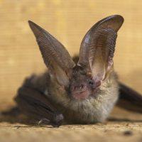 Bat Surveys Explained