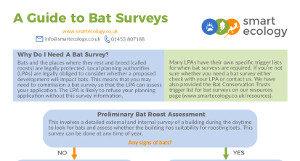 A Guide to Bat Surveys