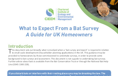 Bat Survey Guidlines for UK Home Owners